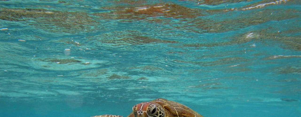Grande Barreira de Coral, Austrália: formada por mais de 3 mil recifes, no largo da região do Queensland, nordeste da Austrália, a Grande Barreira de Coral é a maior estrutura do planeta feita de organismos vivos. Trata-se de um paraíso natural, com tartarugas marinhas, baleias e golfinhos, com peixes e corais coloridos, num lugar incrível para mergulhar em família