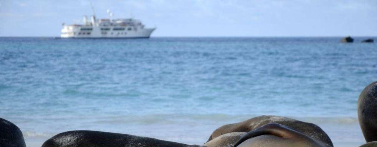 Ilhas Galápagos, Equador: a cerca de 1000 km do litoral do Equador, as ilhas Galápagos são um santuário de vida marinha e terrestres, com numerosas espécies únicas, que não são encontradas em nenhum outro lugar do planeta. O melhor jeito de percorrer as treze ilhas que formam o arquipélago das Galápagos é a bordo de um dos diferentes cruzeiros que permitem avistar animais como leões-marinhos, pingüins e tartarugas