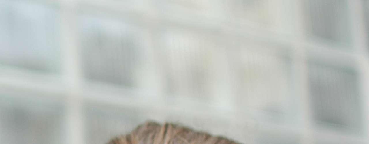 Homens com cabelos compridos adotaram em massa o coque