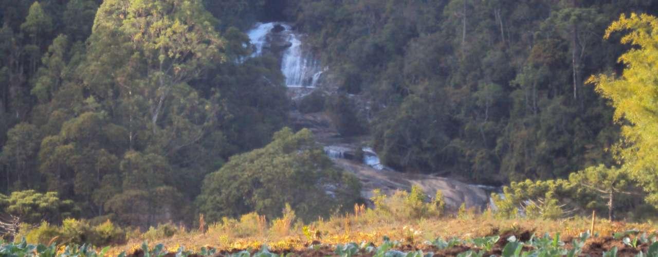 Repolhos crescem em meio à tranquilidade da serra da Mantiqueira, na foto de João Antonio