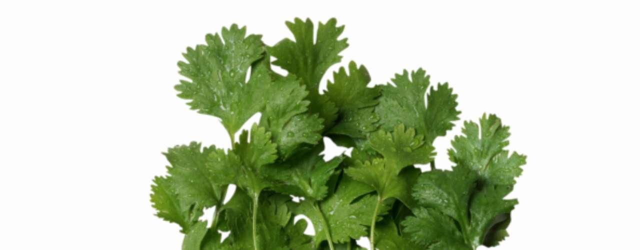 Coentro: tem a aparência da salsa, mas odor mais forte e característico e sabor levemente cítrico. Combina bem com peixe, camarão e frango