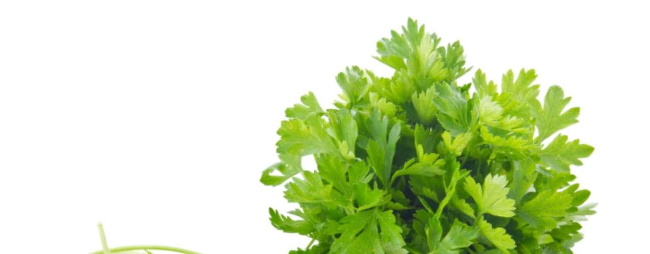 Salsa: é indicada para temperar qualquer alimento, pois seu sabor suave não se sobrepõe ao de nenhum outro ingrediente. Pesquisas apontam que a erva tem o poder de combater doenças cardiovasculares e tem propriedades diuréticas