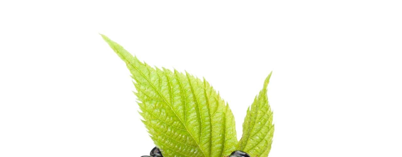 Amora tem licopeno, antioxidante que combate os radicais produzidos pela acne