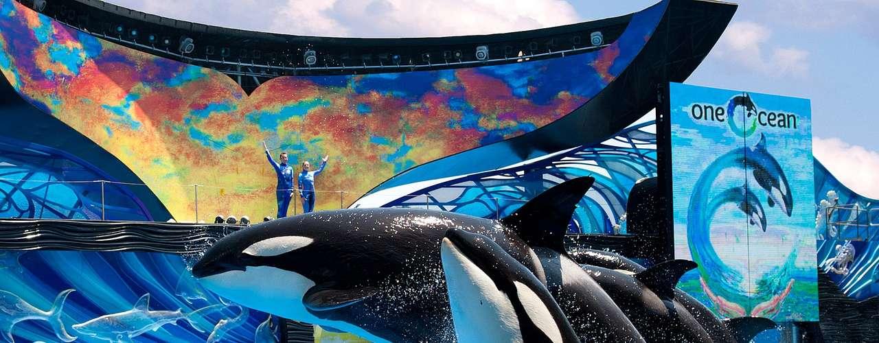 18. Sea World Florida, Estados Unidos: o parque temático de Sea World, em Orlando, tem espetáculos com  animais marinhos, além de brinquedos aquáticos e outras atividades temáticas. A nova atração Turtle Trek tem um cinema 3D de 360°, deu um empurrão no número de visitantes, ultrapassando a marca de 5 milhões em 2011