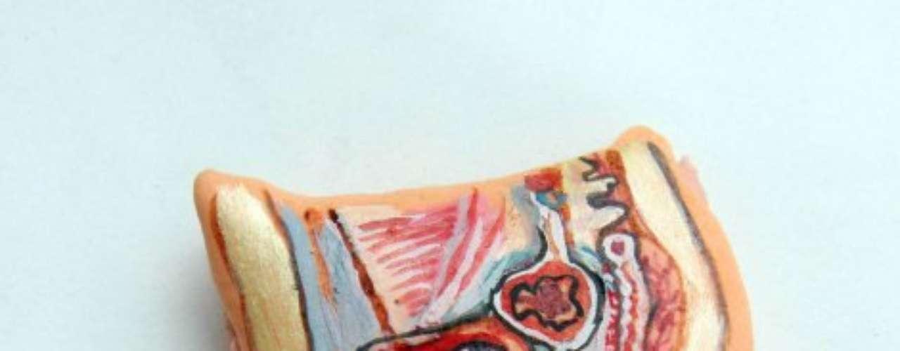 Gelatinas pintadas à mão representando partes do corpo humano, como o sistema reprodutivo masculino