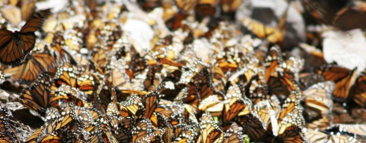 Migração das Monarcas, México: ano após ano, as borboletas monarcas encaram uma longa migração entre o México e o Canadá. A duas horas da Cidade do México, no Vale de Bravo, milhares de borboletas se reúnem sobre as árvores, com um visual incrível dominado pela cor laranja. O espetáculo é muito popular entre os turistas, que fazem a viagem para ver de perto este fenômeno da natureza