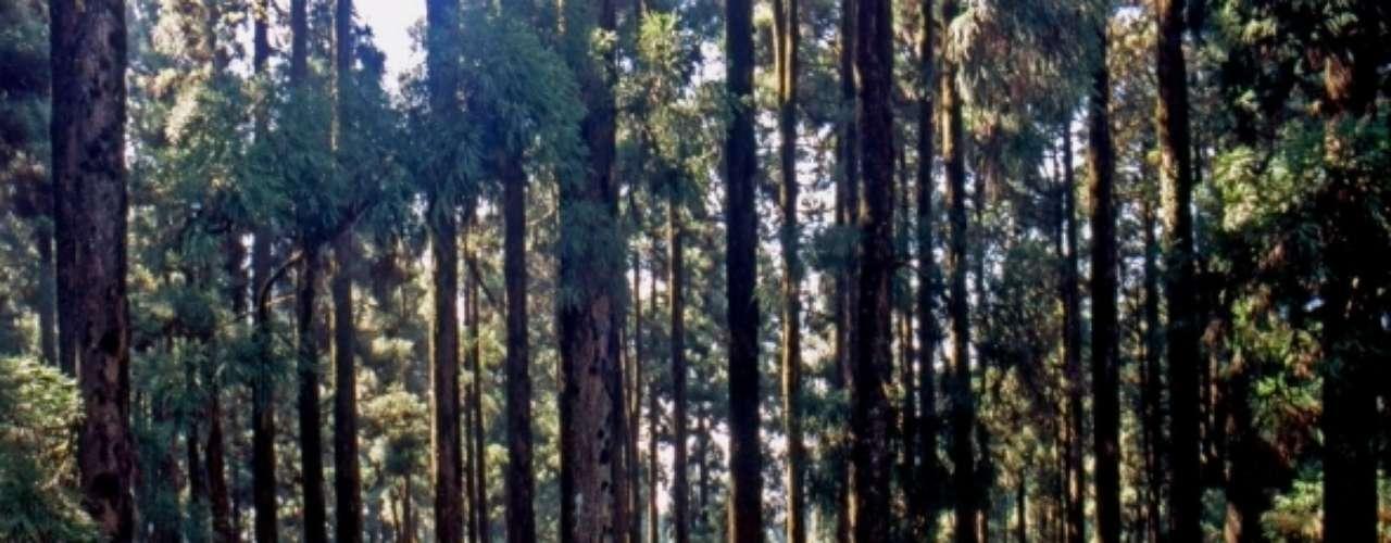 Dow Hill, Índia: situado na região oeste de Bengala, na Índia, o colégio Victoria Boys School abriu no século 19 e é conhecido por, supostamente, ser mal-assombrado, com passos misteriosos em seus corredores.  A floresta de Dow Hill, que rodeia a escola, tem ainda mais atividade paranormal, com numerosas histórias assustadoras como a aparição de uma criança sem cabeça passeando pela área