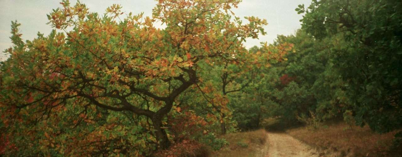 Floresta de Hoia-Baciu, Romênia: a região romena da Transilvânia é famosa por ser o lar do conde Drácula. Mas essa não é a única história assustadora da área. Os moradores que vivem cerca da floresta de Hoia-Baciu afirmam que o local é um portal para o  além, e que aqueles que passeiam por seus caminhos recebem vibrações intensas, sentindo-se enjoados e desconfortáveis o tempo inteiro