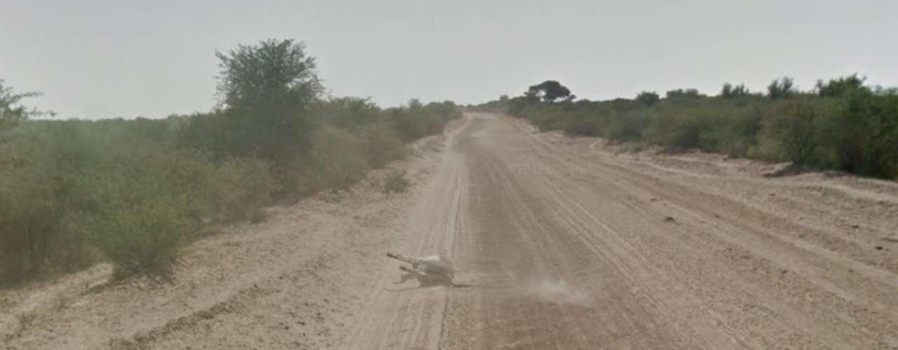 Imagens do Google Street View em Botswana mostram um burro andando e depois deitado em sequência de imagens. Um usuário afimrou pelo Twitter que o carro do Google pode ter atropelado o animal durante o mapeamento