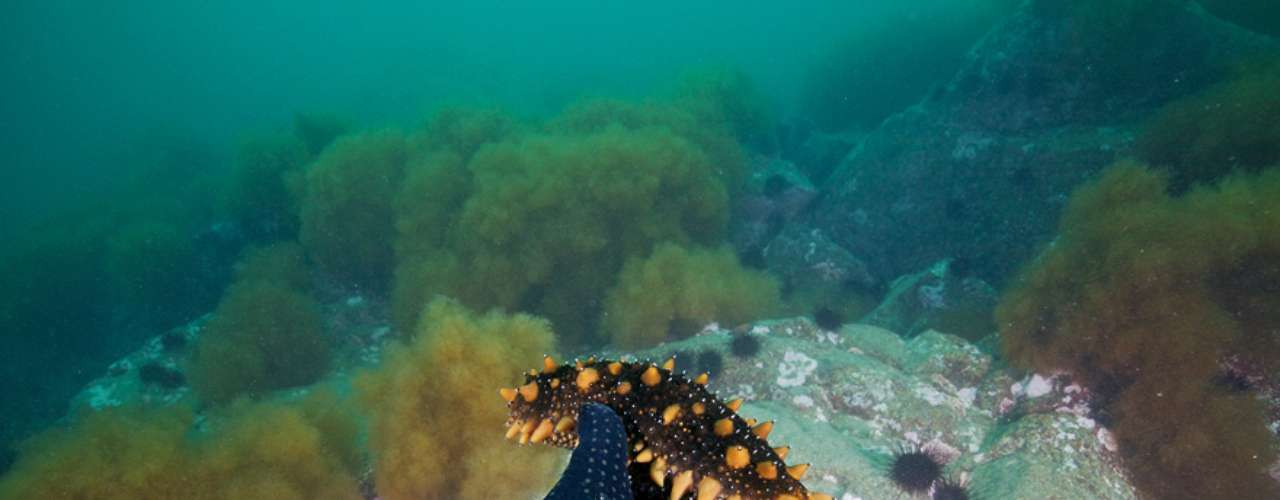 A 'Time' destaca ainda a dificuldade de fazer imagens no Mar Branco, onde as águas são muito frias e com pouca visibilidade