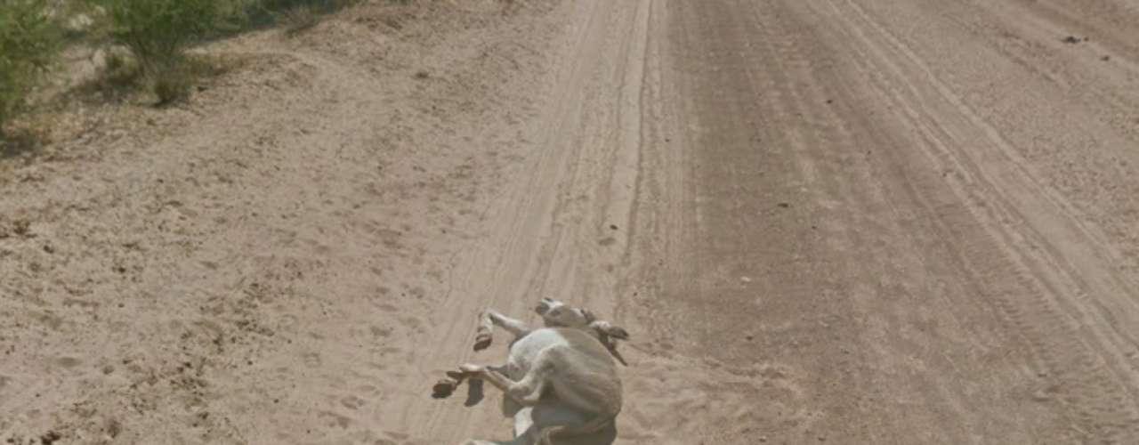 A sequência mostra o burro envolto em poeira, sugerindo que recém caiu, e depois apenas imóvel, deitado
