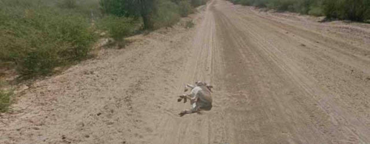 O Google divulgou imagens brutas do mapeamento no local para provar que não atropelou o burro. Na primeira imagem, o animal aparece deitado antes da passagem do carro