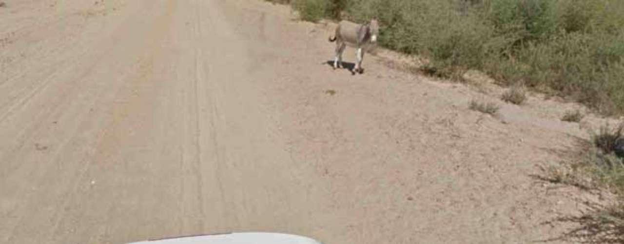 Por fim, depois da passagem do carro, o burro aparece ao fundo, em pé. \