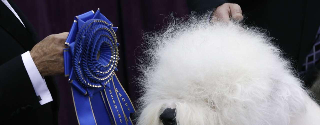 Old english sheep Swagger recebe premiação