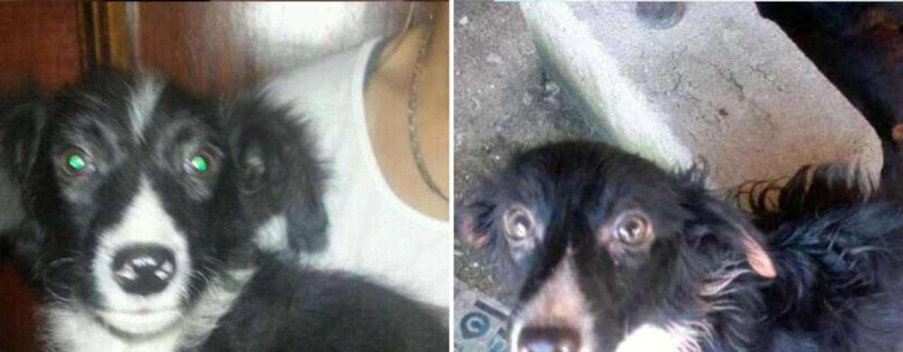 O cachorro H2O antes e após ser retirado da casa