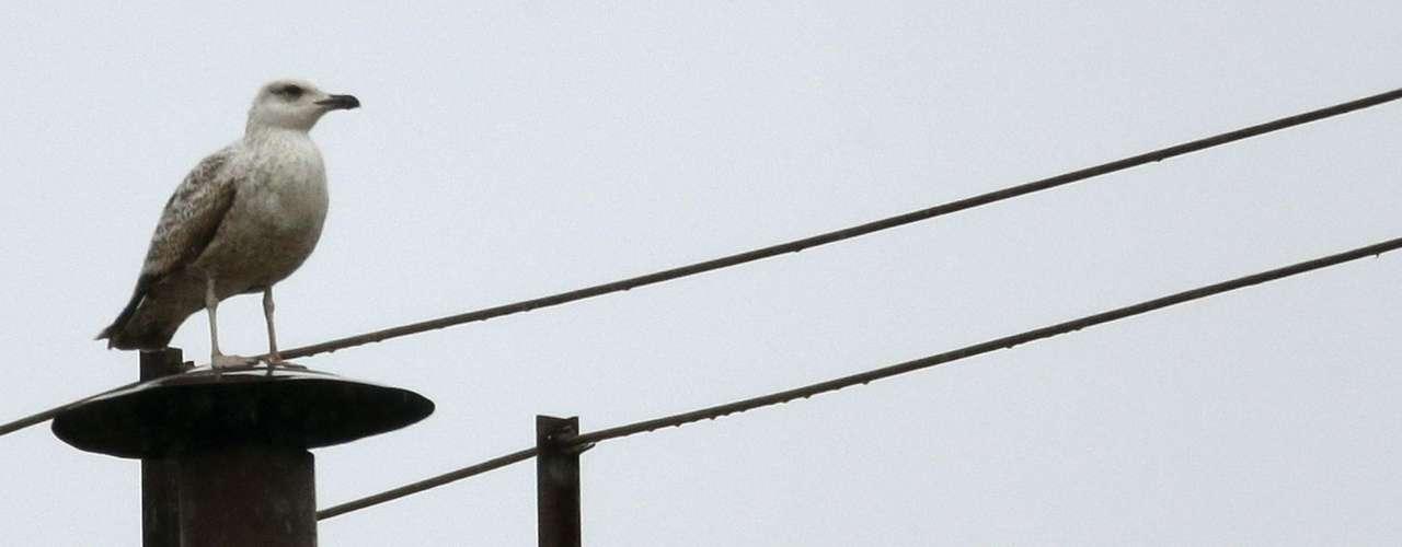 13 de março - Antes de uma nova fumaça ser expelida, uma gaivota pousou em cima da chaminé da Capela Sistina