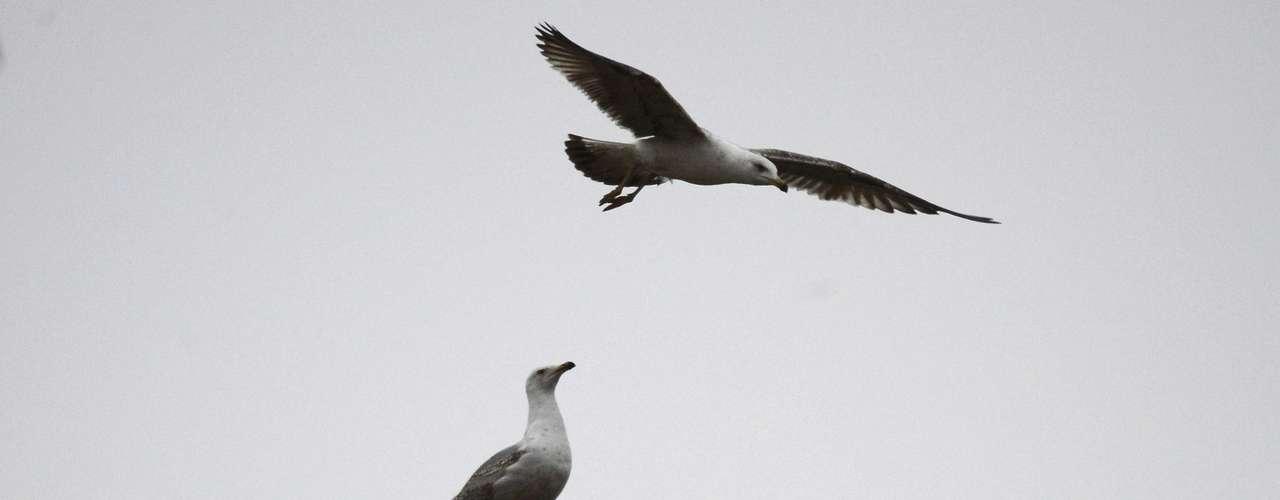 Duas gaivotas disputam espaço no topo da chaminé da Capela Sistina, antes da fumaça branca que anunciaria que a Igreja tem um novo papa