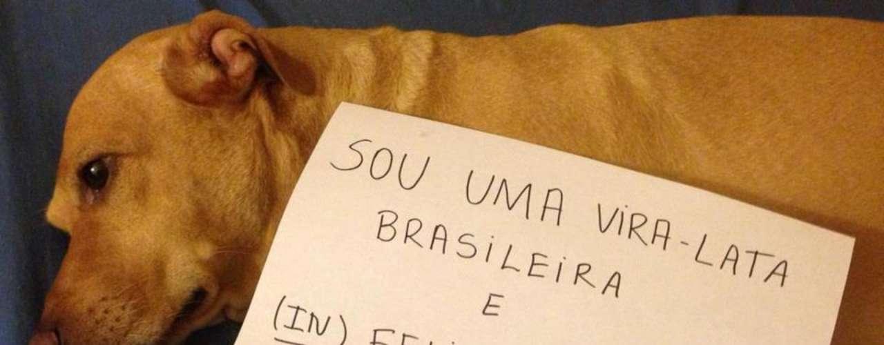 Cachorros e gatos aparecem em fotos com placas também afirmando que o pastor evangélico não os representa