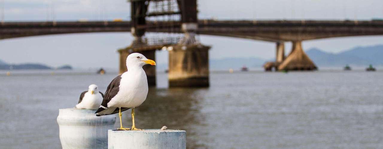 26 de marçoGaivota é vista na orla de Florianópolis pela manhã