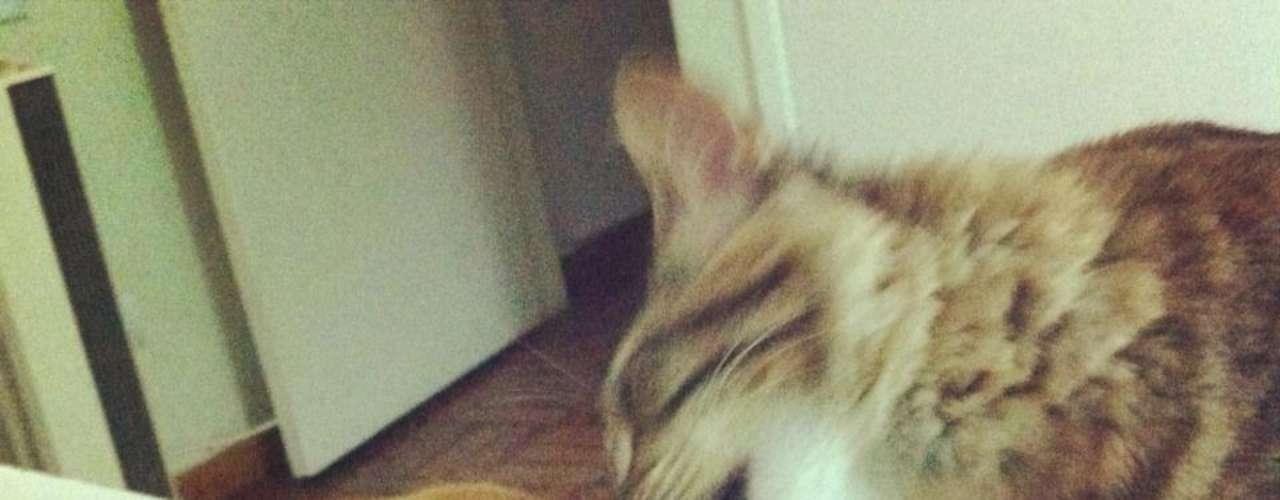 Internautas também brincaram postando fotos de 'beijos' entre animais, como este gato lambendo o focinho de um cachorro