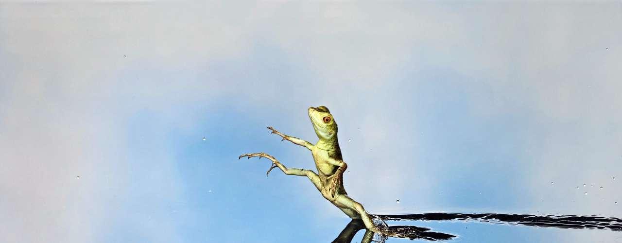 Brian Bevan registrou esta espécie de lagarto que consegue \