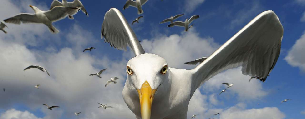 Brutus Ostling chamou a atenção desta gaivota com um pedaço de pão e conseguiu fazer esse registro, na Noruega