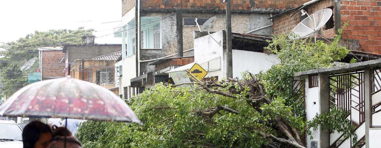 25 de abril Árvore caiu na rua dos Ferroviários (São João), em Salvador, durante forte chuva