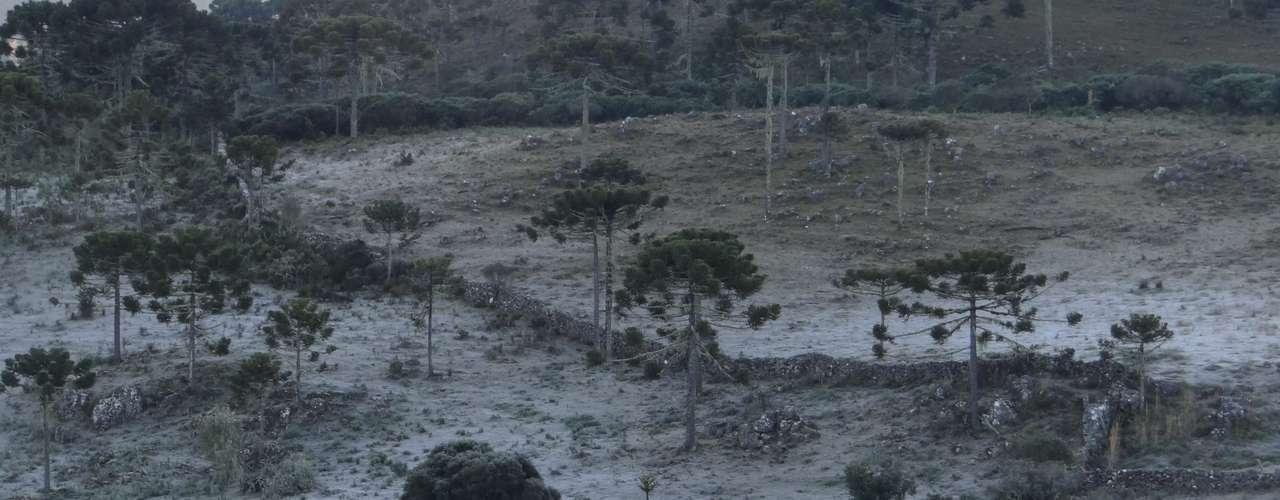 4 de junho - Urupema, na região serrana de Santa Catarina, voltoua registrar temperaturas negativas nesta terça-feira