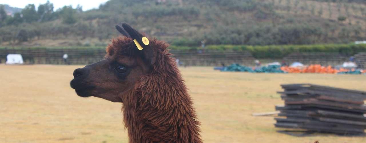Todo dia 24 de junho, no solstício de inverno, o local recebe o festival Inti Raymi, que representa o ritual incaico de culto ao deus sol