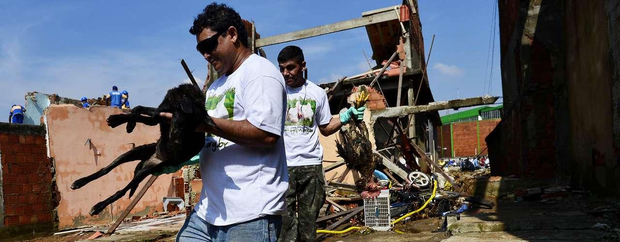 Animais foram resgatados dos escombros