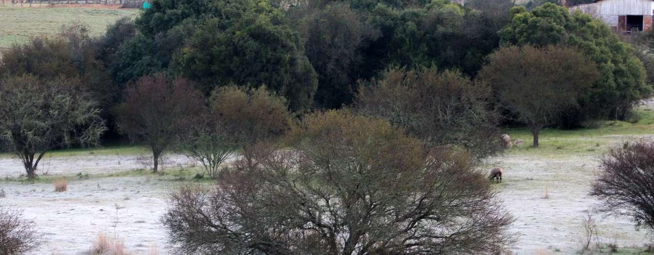 11 de agosto - A geada atingiu a zona rural de Santana do Livramento, no Rio Grande do Sul