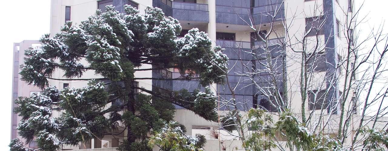 27 de agosto - Neve ficou acumulada na vegetação emCaxias do Sul, na serra gaúcha