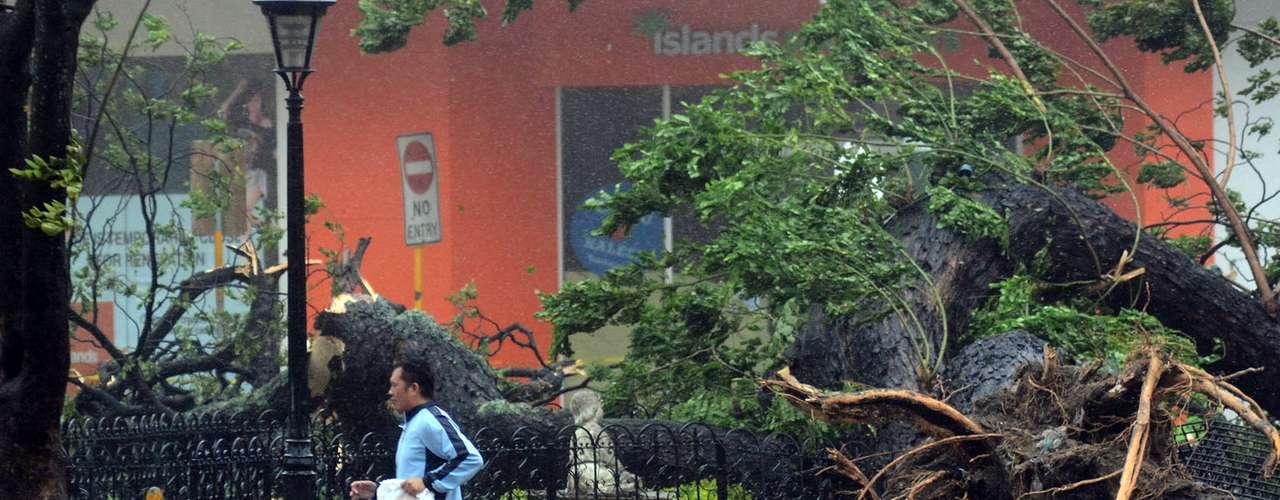8 de novembro -Em Cebu, o Haiyan chegou derrubando árvores e provocando estragos