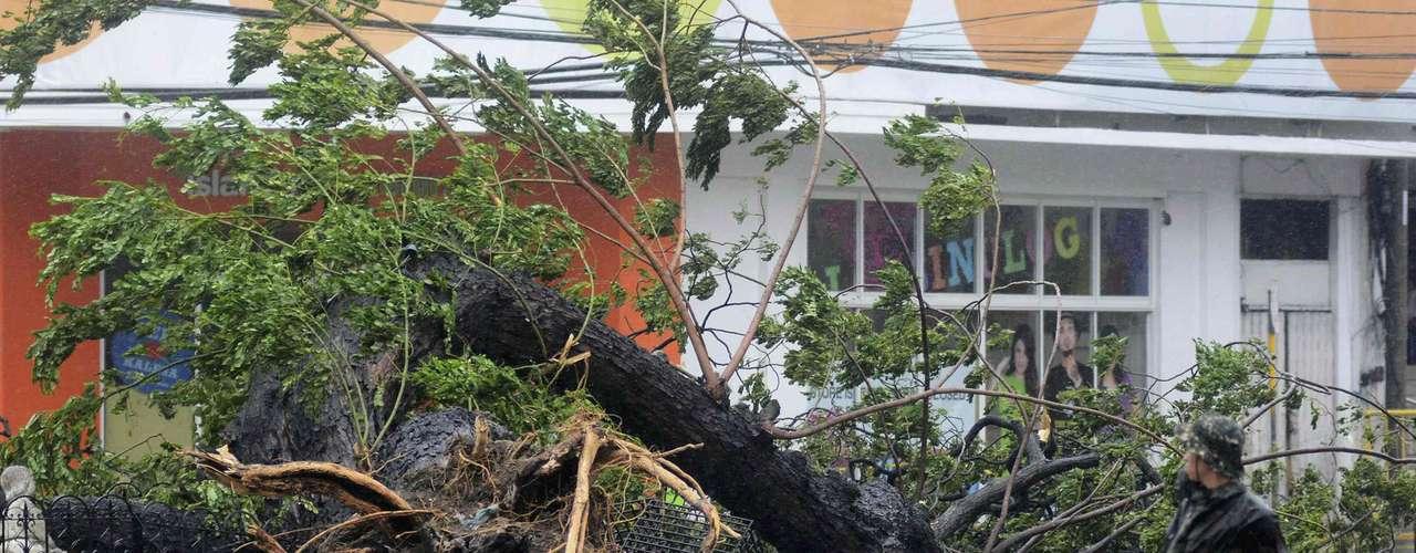 8 de novembro -Ventos de mais de 200 km/h derrubaram árvores em Cebu