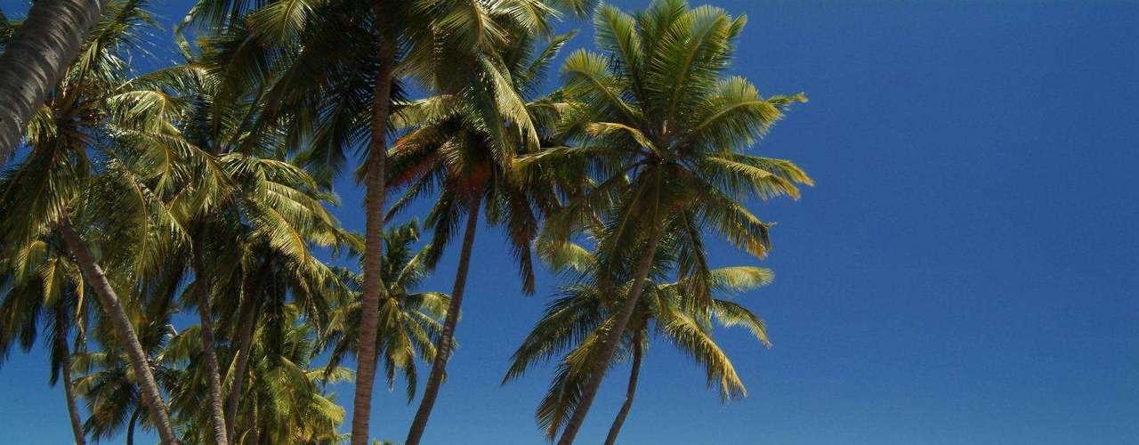 Hotel Coqueiros Express, Maceió, Alagoas: Com passagem aérea (saindo de Curitiba), traslado, café da manhã, city tour e passeio pelo litoral sul, o pacote do dia 6 a 10 de junho sai a partir de R$ 1840 por pessoa, em apartamento duplo. Informações: (41) 3888-3499