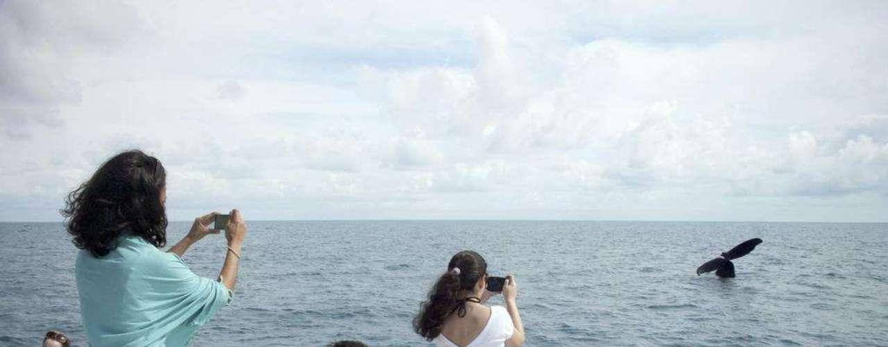 Abrolhos, Brasil: o mês de julho dá início à temporada de baleias em Abrolhos, no litoral baiano. É uma excelente desculpa para conhecer este arquipélago formado por cinco ilhas e protegido dentro do Parque Nacional Marinho dos Abrolhos. O melhor é hospedar-se na cidade de Caravelas, no litoral, e fazer passeios de um dia nas ilhas.