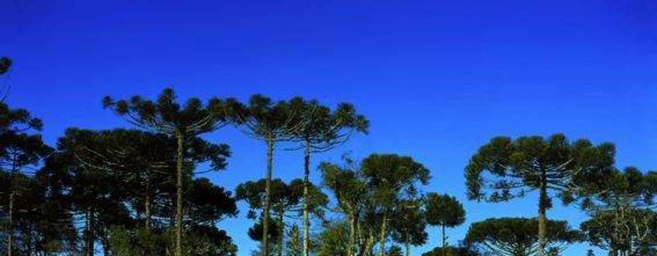 Gramado, Brasil: a Serra Gaúcha é um dos destinos mais agradáveis do Brasil para curtir o frio durante o inverno. Entre as cidades da serra, Gramado é considerada como a mais bonita e turística, com lindas  paisagens e deliciosos chocolates artesanais. Para as crianças, trilhas, parques temáticos, entre outras atrações