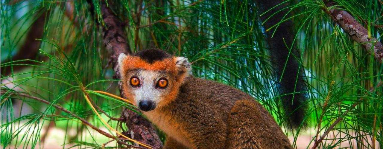 Madagascar: a ilha de Madagascar é um maravilhoso santuário natural, com áreas protegidas que preservam uma das maiores biodiversidades do planeta, com animais como camaleões e lêmures. Os visitantes encontram praias protegidas e desertas, ideais para curtir a natureza em família