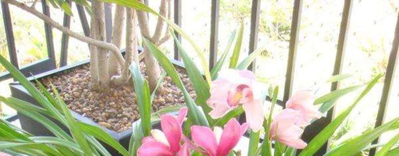 PREPARADO COM A PLANTA MEDICINAL CONFREI. INGREDIENTES: 250 g de confrei e 3,3 litros de água. MODO DE FAZER: Triture um quilo de folhas de confrei misturado a 750 ml de água. Acrescente 2,5 litros de água ao preparado e aplique periodicamente nas plantas. INDICAÇÃO: Controle de pulgões. Orquídeas como as da foto podem sofrer com esse tipo de praga.