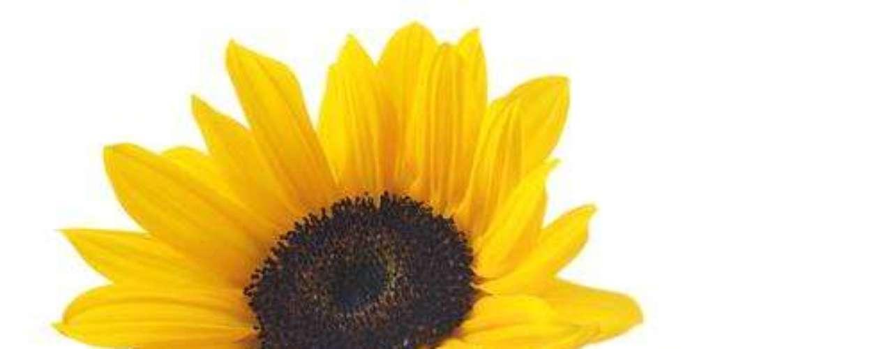 PREPARADO DE GIRASSOL. INGREDIENTES: 50 g de folhas ou flores de girassol e 1 litro de água. MODO DE FAZER: Coloque as folhas na água fervente e deixe em infusão por dez minutos. Use depois de esfriar. INDICAÇÃO: Age contra cochonilha e pulgão.