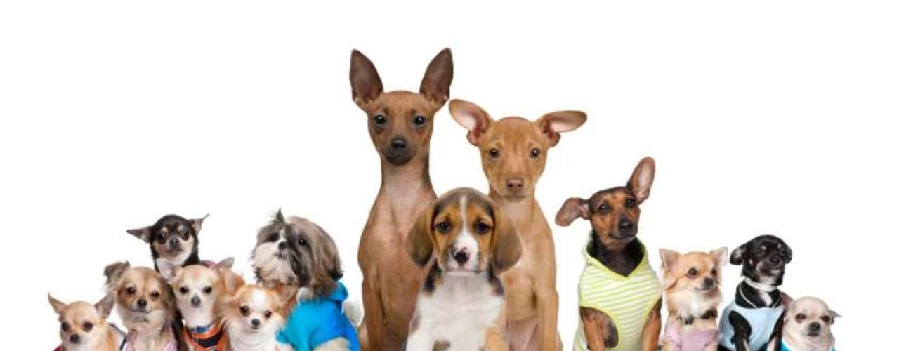 Você teria coragem de gastar uma boa quantia para ter um melhor amigo? Tem muita gente por aí que compra cães por um preço  considerado absurdo por alguns. \