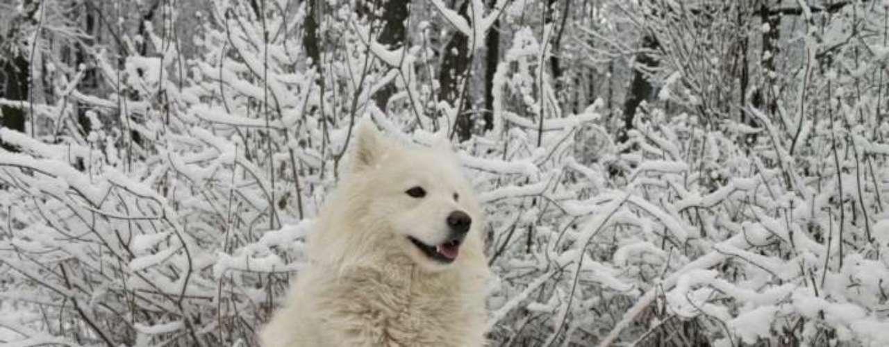Cão Esquimó Canadense: a raça era usada em expedições polares no século 19 e isso levou à sua quase extinção. Em 1986, no entanto, houve a renovação da raça pelo Kennel Club do Canadá. No exterior, este cão custa em média US$ 7 mil. No Brasil, a raça não é criada, já que não resistiria às altas temperaturas