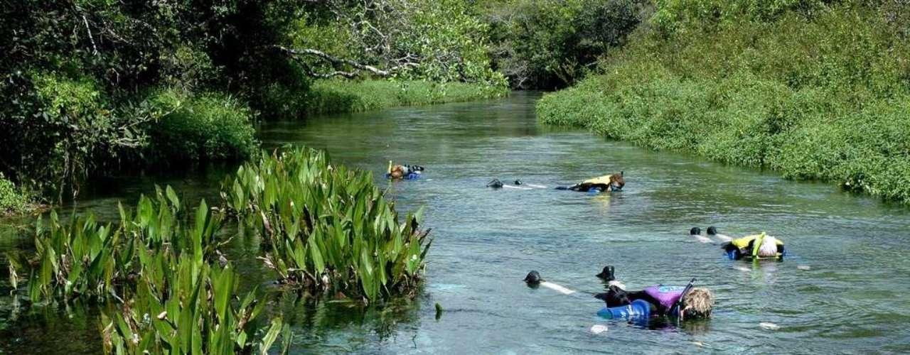 Rio Sucuri, Brasil: situado na Fazenda São Geraldo, a 18 km do centro de Bonito, o Rio Sucuri tem águas transparentes que permitem observar seus numerosos peixes coloridos. Os visitantes fazem um percurso de cerca de 2 km em 45 minutos, flutuando e mergulhando no rio