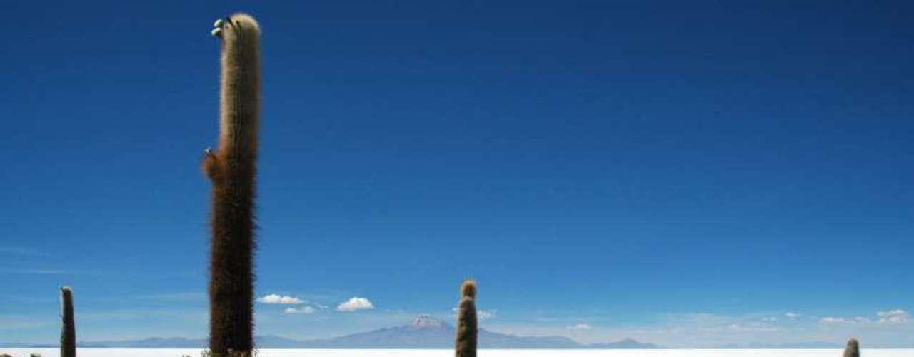 Salar de Uyumi, Bolívia: a maior planície de sal do mundo possui mais de 4 mil metros quadrados. Sua altitude média varia de acordo com o ponto, mas essa variação não passa de um metro por toda a área do Salar