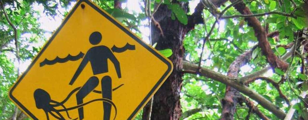 Cape Tribulation, Queensland, Austrália: aves selvagens, cobras venenosas e animais marinhos perigosos habitam o local. Na entrada da praia, uma placa alerta para a presença de águas vivas durante os meses de verão