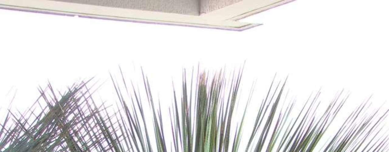 Existem, no entanto, outras espécies que podem compor um jardim desértico. A paisagista Daniela Sedo, de São Paulo, recomenda o agave...