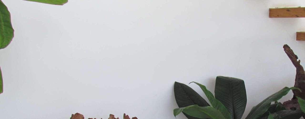 A paisagista Marizeth Estrela, de São Paulo, aconselha a compor o ambiente com pedras e cristais. Informações: (11) 3666-0261