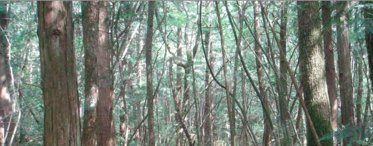 Aokigahara, Japão: conhecida como O Mar de Árvores, a floresta de Aokigahara ocupa a base noroeste do monte Fuji. Rumores indicam que fortes concentrações de ferro subterrâneas interferem com o funcionamento de bússolas, fazendo com que passeantes se percam na floresta. O local também é conhecido por ter numerosos suicídios registrados. Os habitantes dizem que os espíritos destes mortos gritam durante as noites