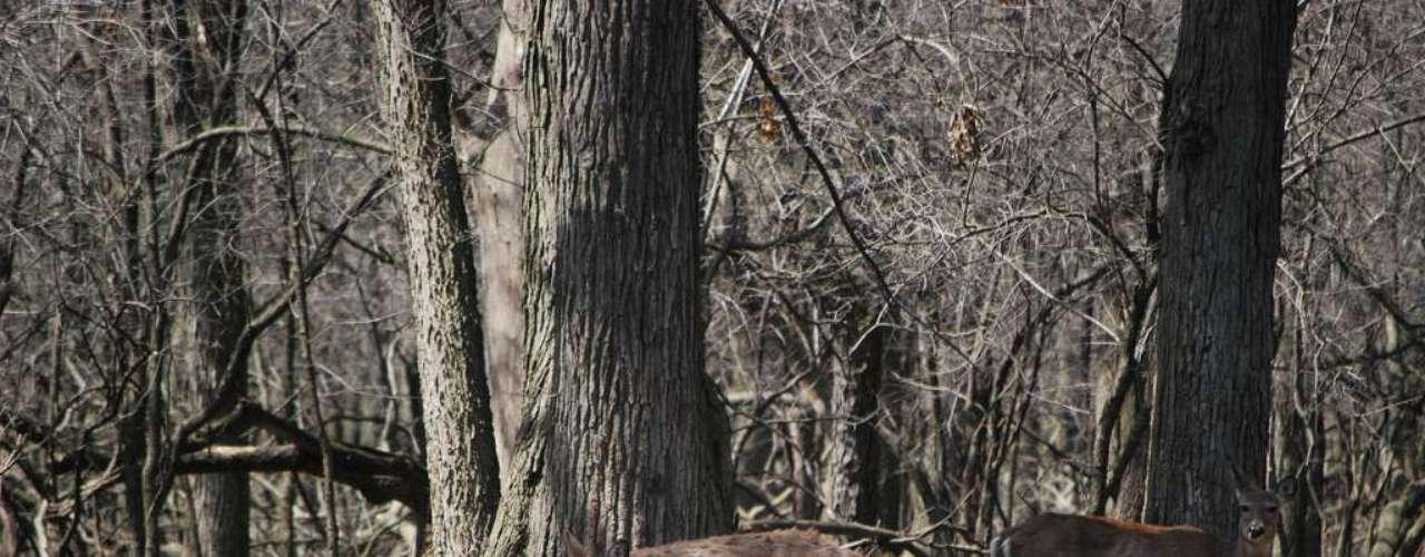 Robinson Woods, Estados Unidos: a floresta de Robinson Woods, no estado americano de Illinois, é o lugar onde está enterrado Alexander Robinson antigo chefe das nações nativo americanas dos Pottawamoties, Ottawa e Chippewa. Durante a noite, estranhas aparições de luzes, que seriam os espíritos de Robinson e sua família, surpreendem os visitantes