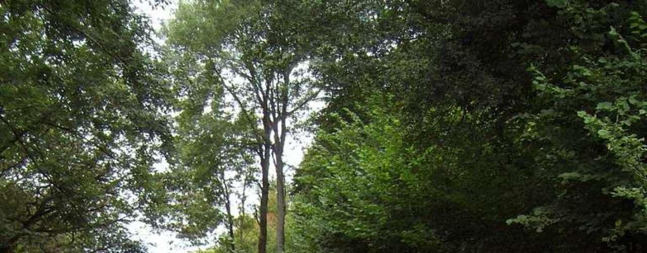 Bosque de Firth, Inglaterra: no começo do século dezenove, perto do Bosque de Firth, nos subúrbios de Londres, uma casa foi transformada em prisão para soldados franceses capturados nas Guerras Napoleônicas. Uma mulher se apaixonou por um destes soldados, que foi espancado até a morte pelo pai e irmão dela. Poucos dias depois, sem suportar a dor, a moça acabou se suicidando. Habitantes locais afirmam que, até os dias de hoje, seu espírito anda freneticamente assombrando o bosque de Frith em busca de seu amor
